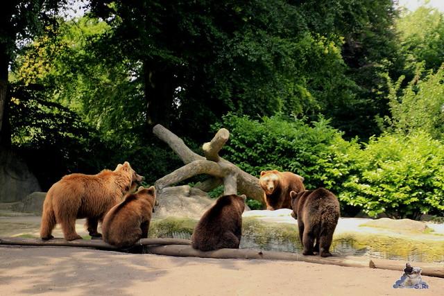 Tierpark Hagenbeck 04.07.2015  61