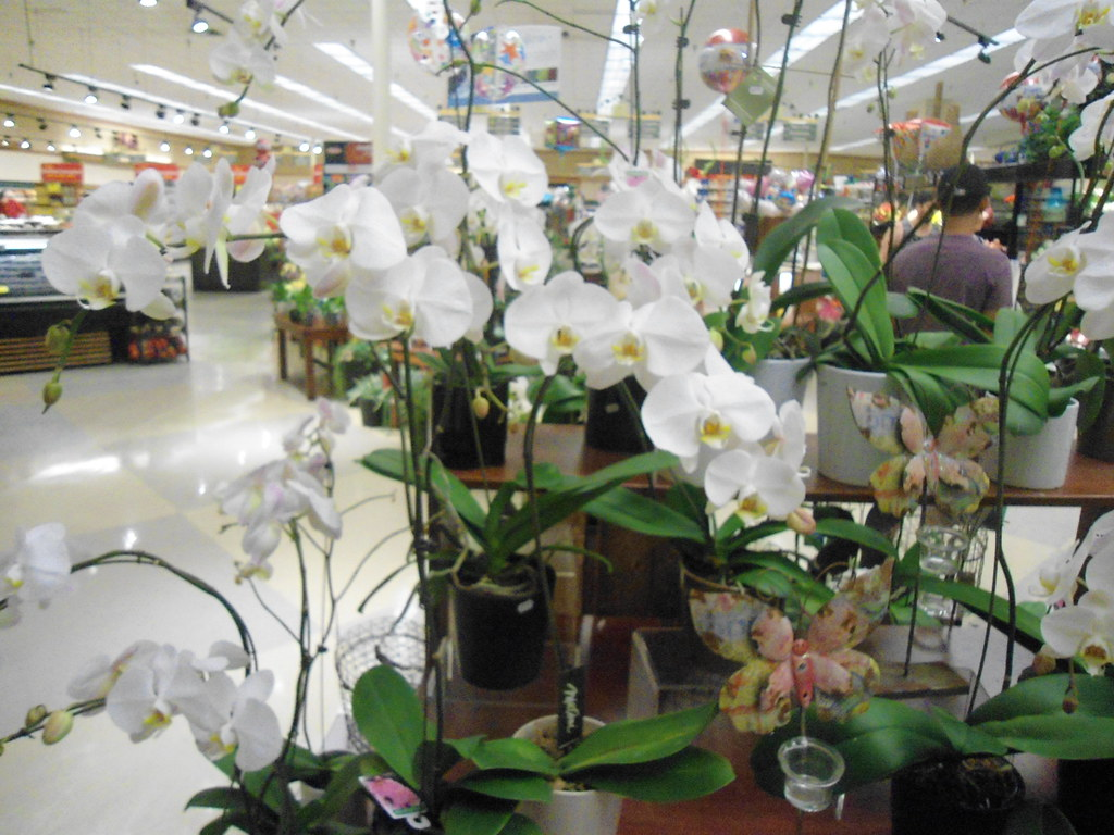 Ralphs market orchids and flowers in palm springs ca flickr ralphs market orchids and flowers in palm springs ca by patricksmercy mightylinksfo Images