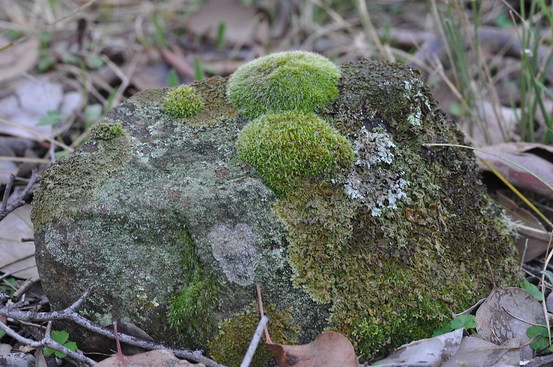 Stone with mosses and lichens