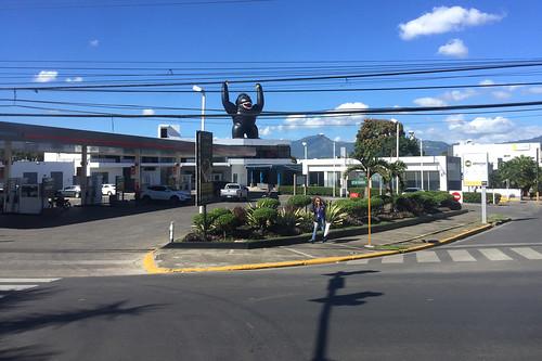 26 - Gorilla - Santiago de la Cabelleros