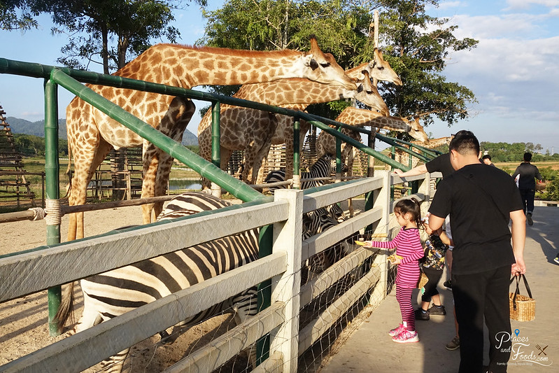 glamping in singha park animal farm