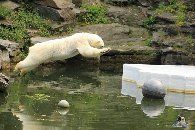 Tierpark Berlin 13.06.2015   203