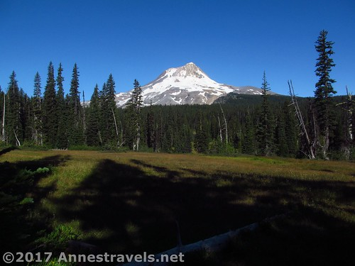 A pretty realistic view of Mt. Hood across Elk Meadows, Mount Hood National Forest, Oregon
