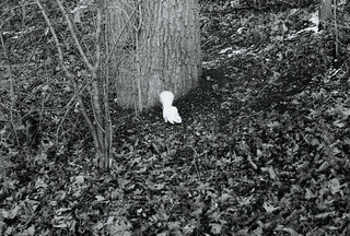 Albino Squirrel | by Sam Blackman