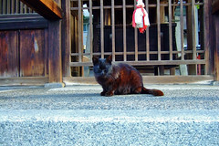 Today's Cat@20060403 | by masatsu