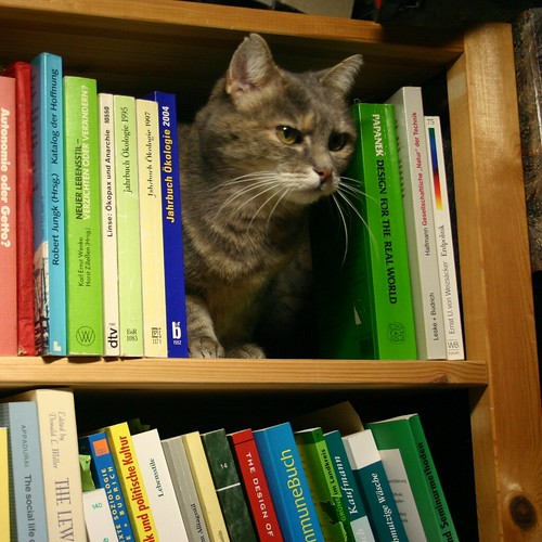 Shelf the cat I | by tillwe