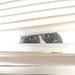 Peeping Sam