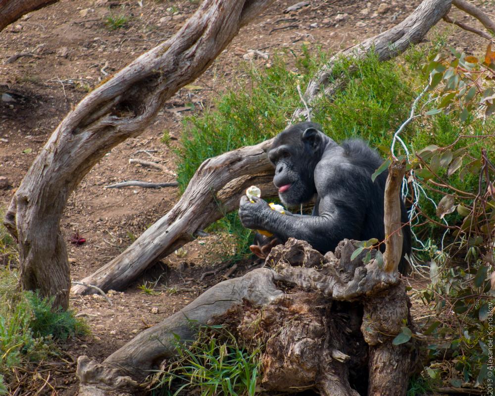 20131006 Monarto Zoo