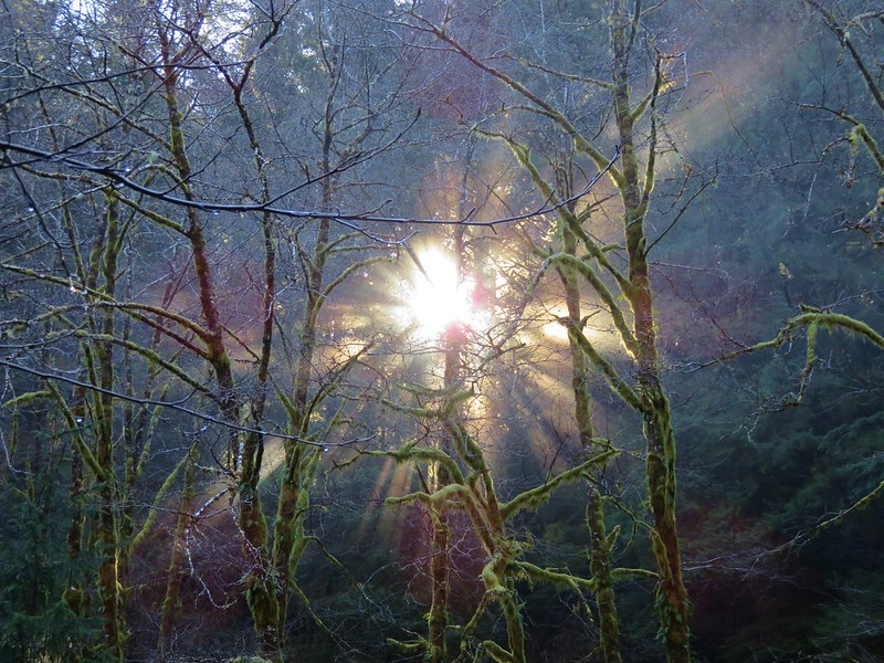 Sunlight through the trees in the Rock Creek Wilderness