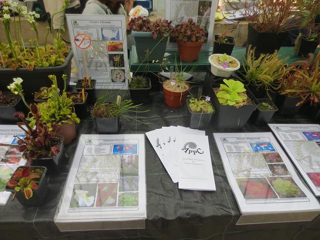 Exposição Jardim Botânico da Ajuda - Abril 2015 18745656305_80d754301a_z
