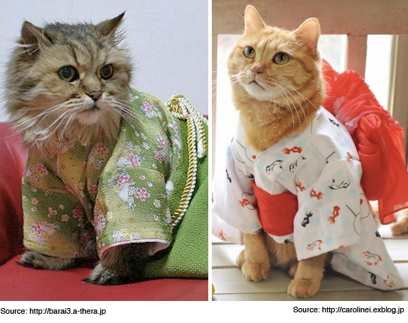 cats-wearing-kimonos-7-3-15
