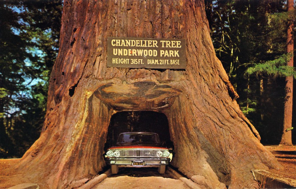 Chandelier Drive Thru Tree Underwood Park Ca By Edge And Corner Wear