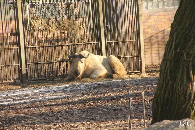 Tierpark Friedrichsfelde 22.01.201752