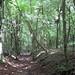 Great Bois Woods