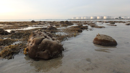 Living shores of Pulau Hantu (Western Lagoon)