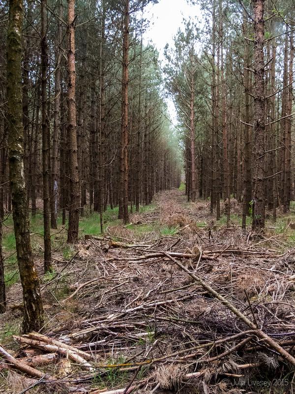Making a path through the trees
