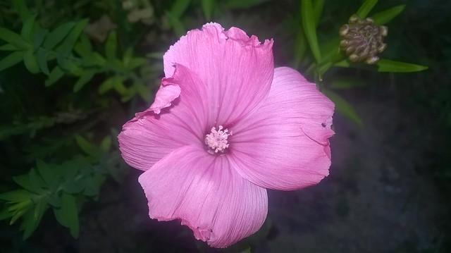 butinages du jour à l'ombre de nos plantes  18738887273_02209cf0ca_z