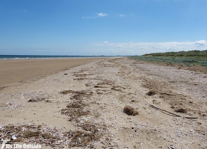 P1130603 - Titchwell Beach