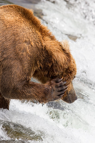 how to fix bear itch