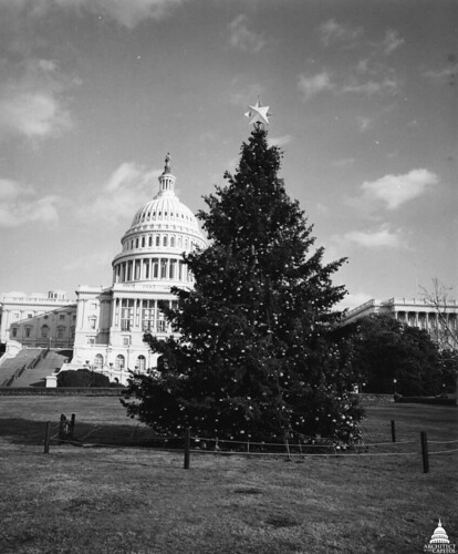 1976 U.S. Capitol Christmas Tree | by USCapitol