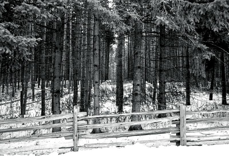 Prefab Forest_