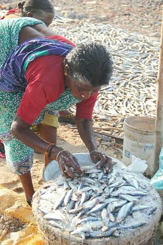 Local fishermen allege that fish catch has reduced drastically over the years.