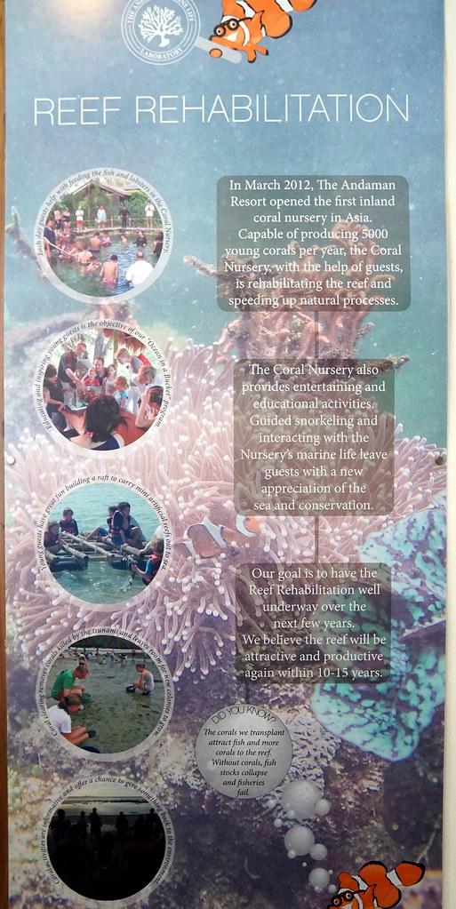 Andaman langkawi - coral nursery-005