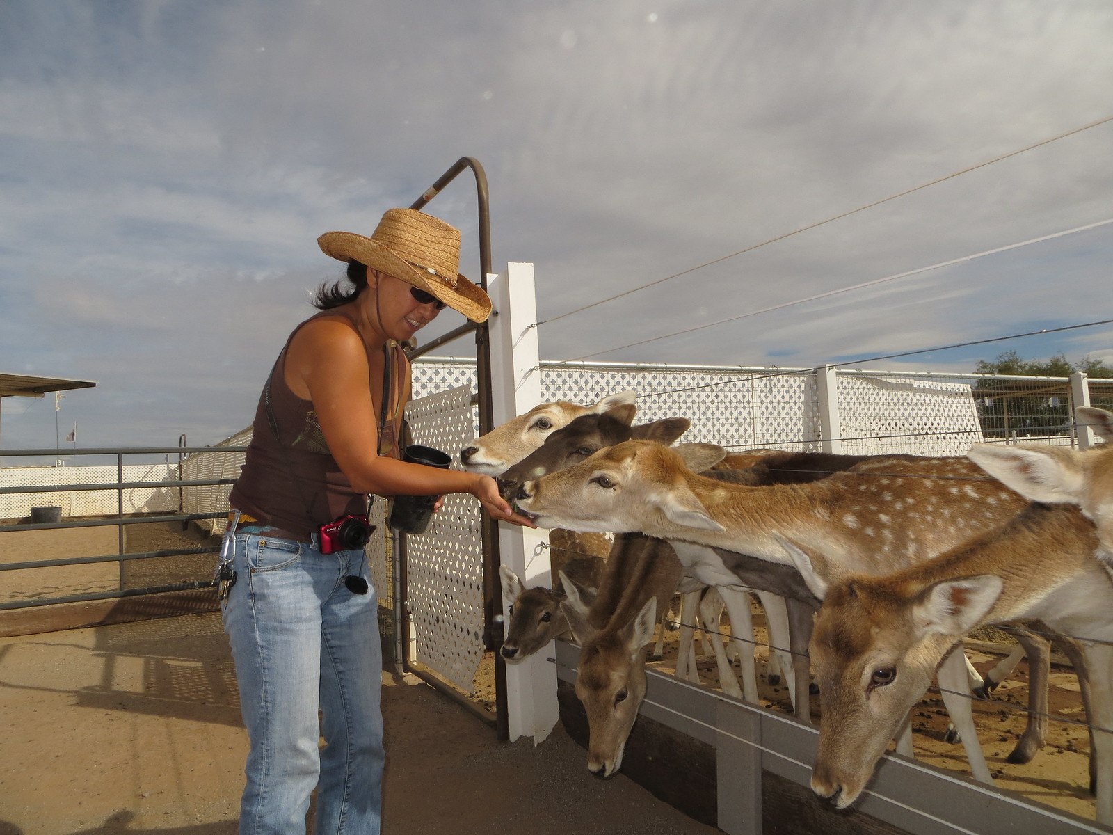 PIC: Rooster Cogburn Ostrich Ranch - Maya petting the Fallow Deers