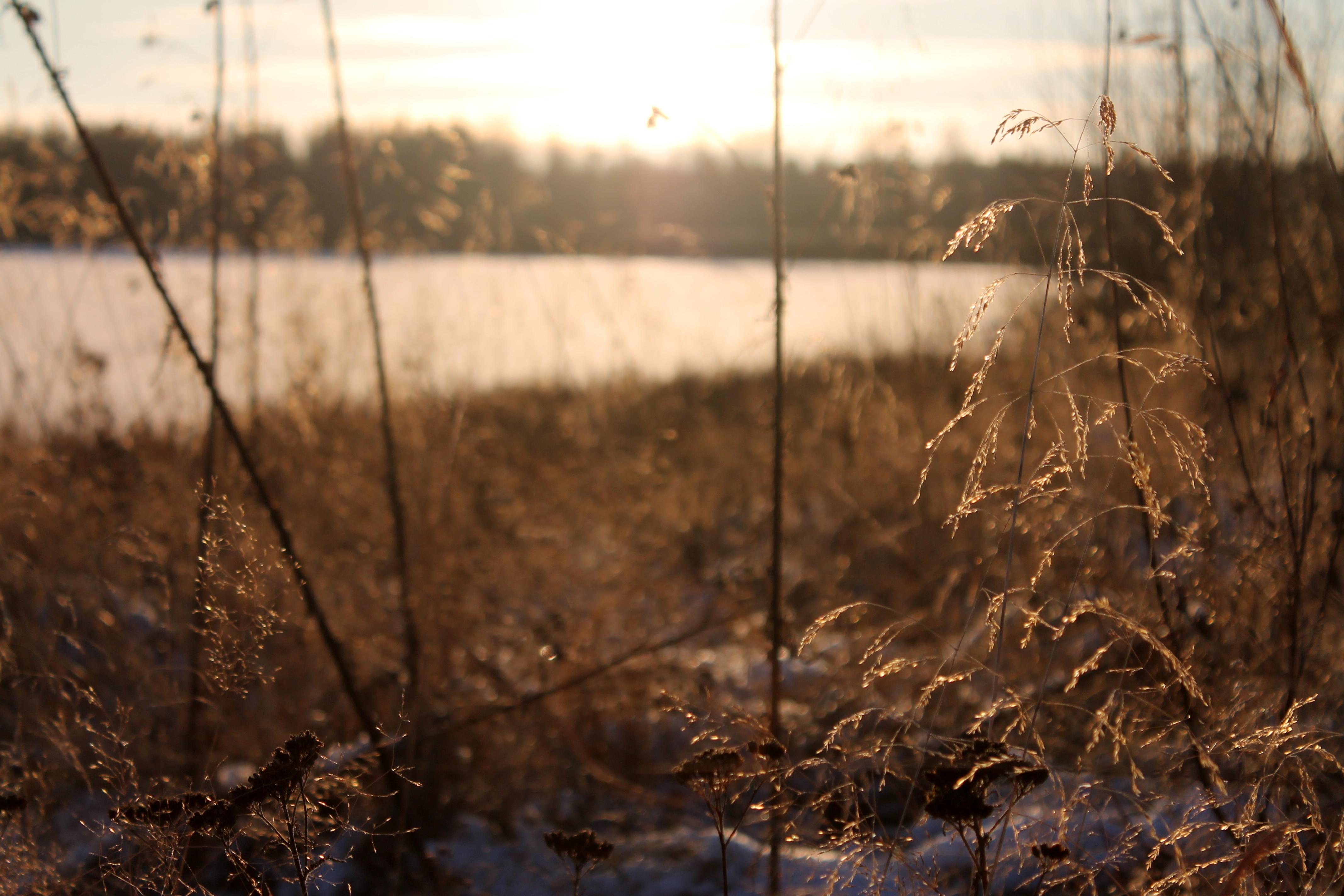 ylläsjärvi heinä