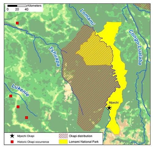 okapi range in Lomami landscape