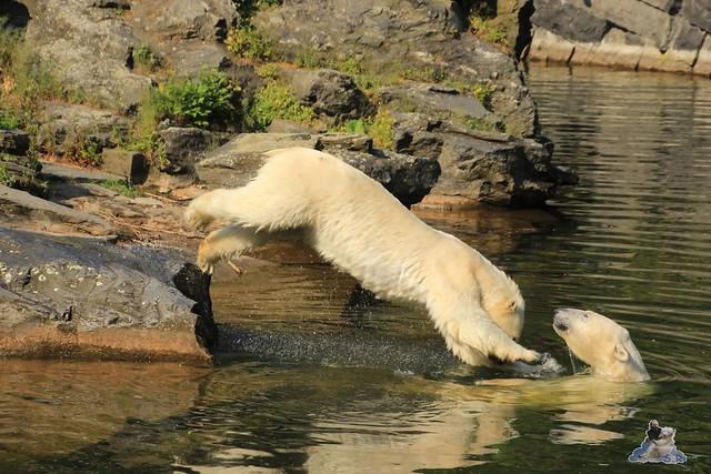 Tierpark Berlin 13.06.2015   24