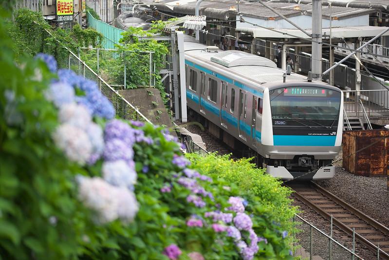 東京路地裏散歩 諏方神社のアジサイ 2015年6月14日