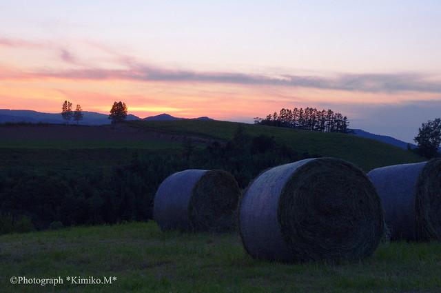 牧草ロールのある夕景
