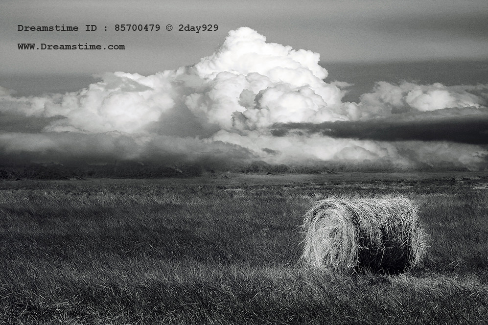 Hay - Black and White