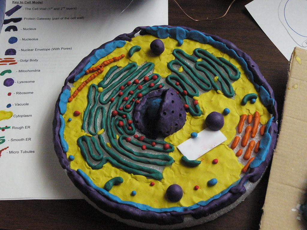 Как сделать модель клетки по биологии своими руками 5 класс из бумаги