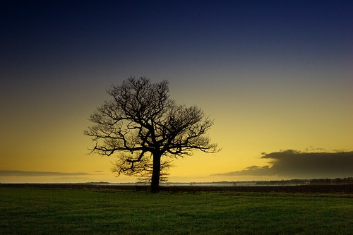 Tree at Sunset | by Mute*