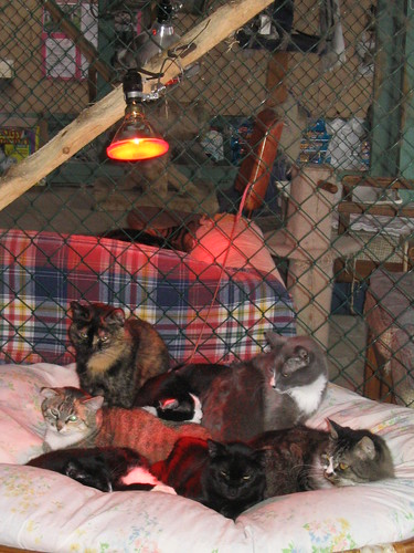 Cats Under A Heat Lamp This Looks Pretty Close To Heaven