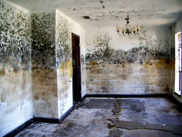 Image Gallery Moldy Room