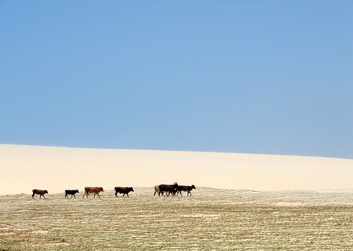 the peaceful kingdom of the little cows | by Kika BR