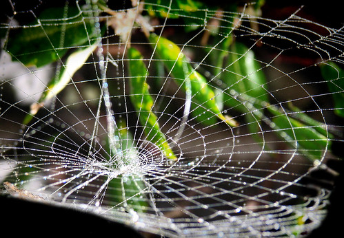 Spider Web Gravity Well | by Automania