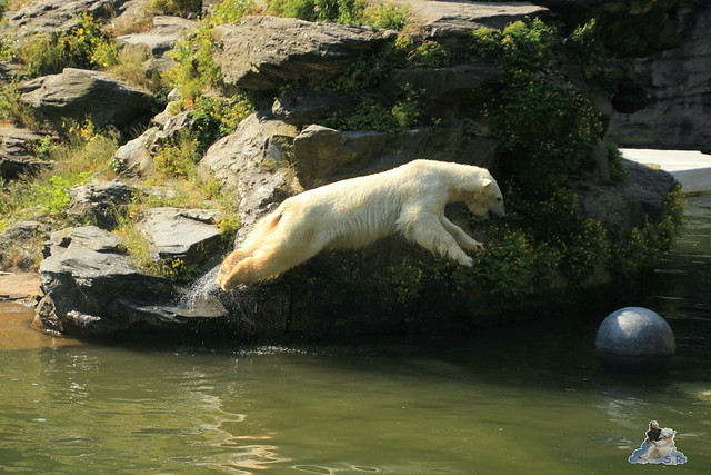 Tierpark Berlin 13.06.2015   59