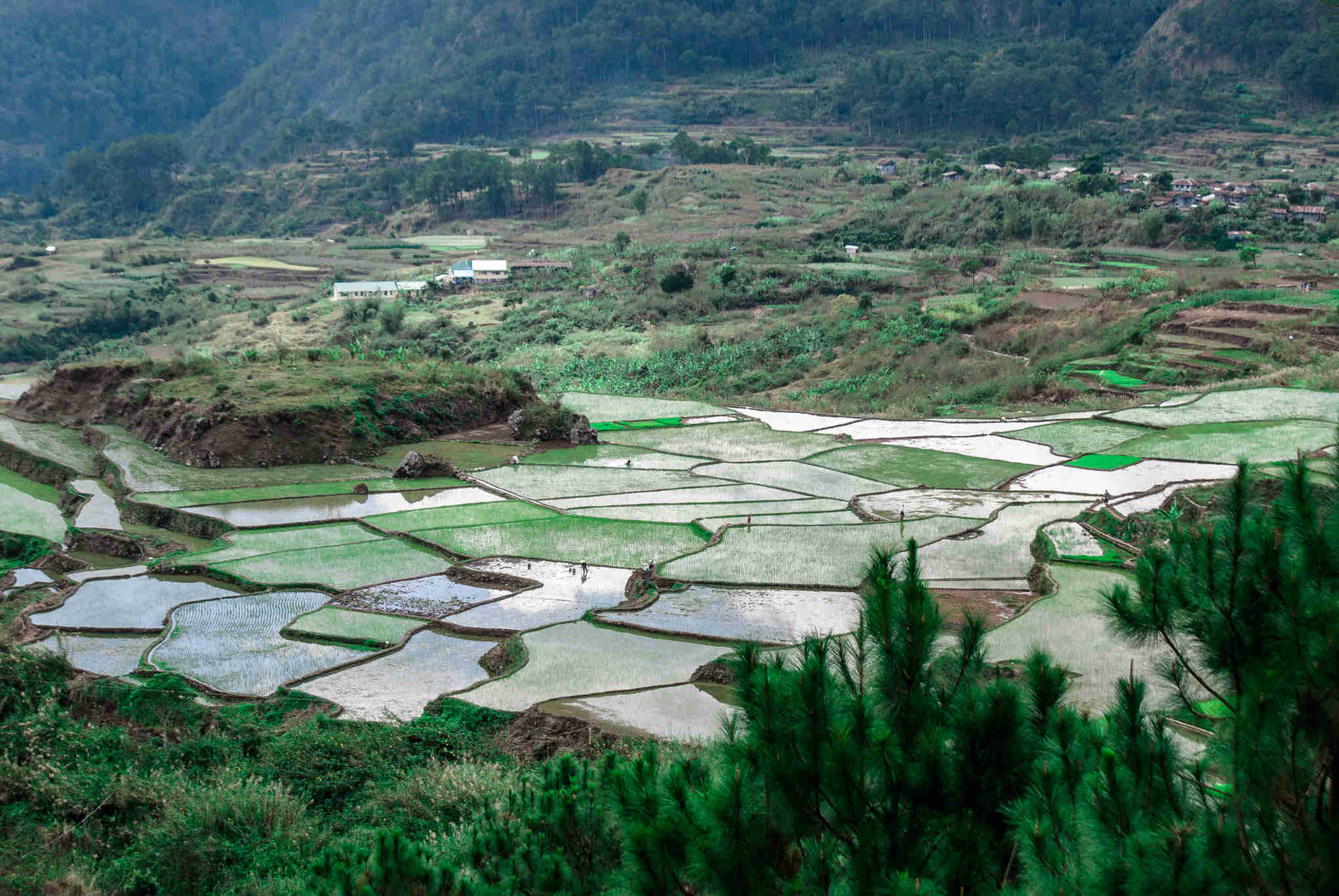 SAGADA rice terraces 5-2_7