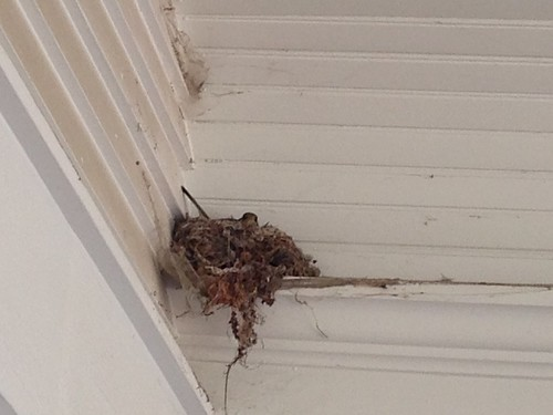 Flycatcher nest in the inside corner of the porch roof