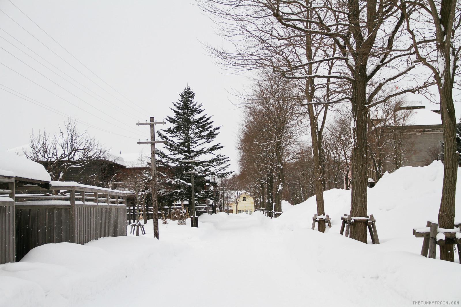 32535124840 d23f402ecd h - Sapporo Snow And Smile: 8 Unforgettable Winter Experiences in Sapporo City