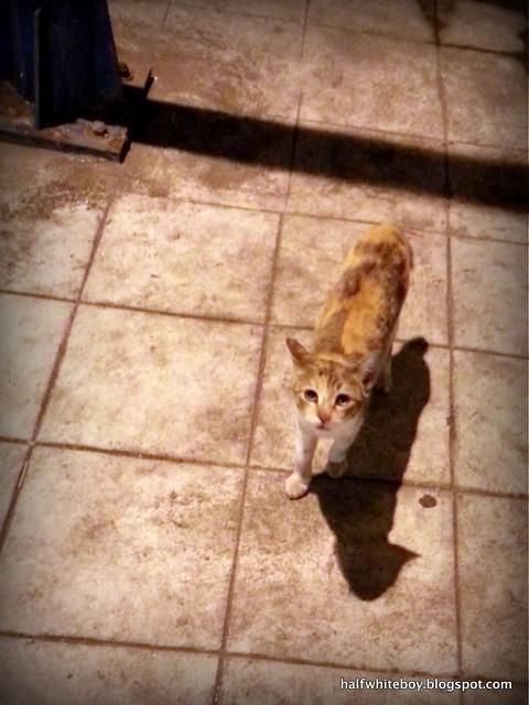 stray cats 07