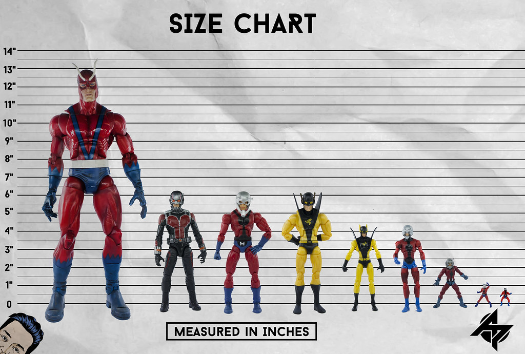 antman size chart where to get the latest action