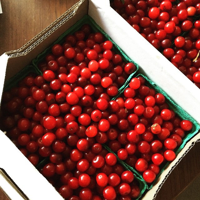 It's sour cherry day! Thanks for growing such great fruit, @3springsfruit!