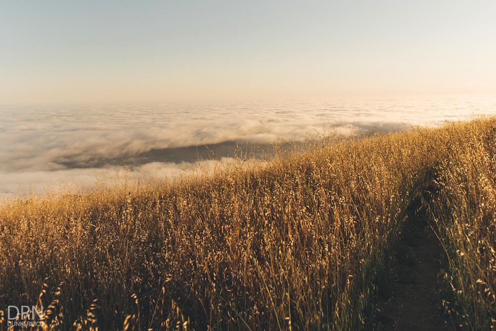 Mt Tam.