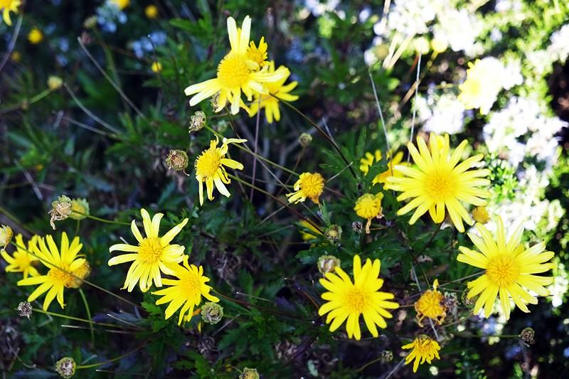 m_Flowers 1