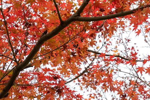 autumn_leaves_2017_01